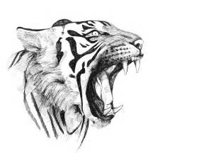 Tiger Sketches Drawings