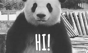 China Panda GIFs - Find & Share on GIPHY