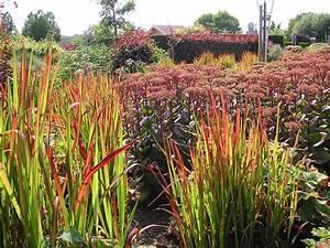 Rotes Gras Winterhart : japanisches blutgras imperata red baron gras imperata ~ Michelbontemps.com Haus und Dekorationen