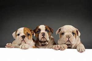 Ab Wann Muss Man Erbschaftssteuer Zahlen : ab wann kann man einen hund barfen der barf spezialist ~ Lizthompson.info Haus und Dekorationen