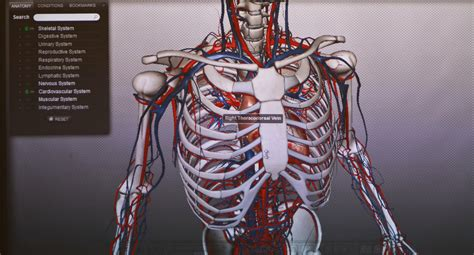 human anatomy animated    technology