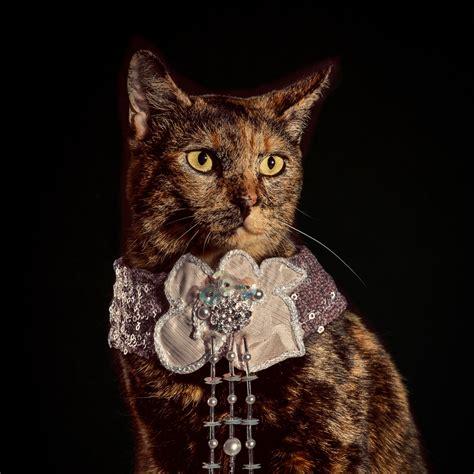 elizabethan cat collars ad campaigns