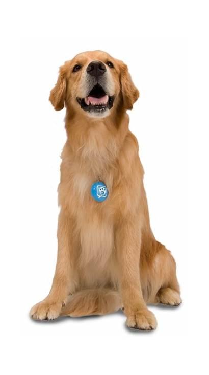 Dog Golden Dogs Shepherd Pngimg Transparent Photoshop