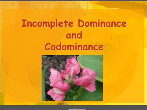 Incomplete Dominance And Codominance Sliderbase