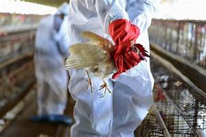 Watch Out For Bird Flu  Who Says