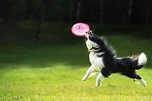 How to Train Your Dog to Catch a Frisbee