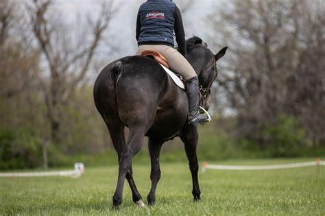 jumper  rogue  jumper rider  horse   tail