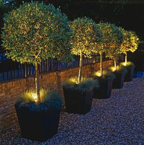 Illuminazione Per Piante Illuminazione Da Giardino Ad Energia Solare