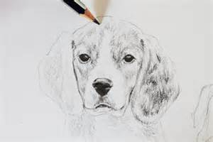 How to Draw a Realistic Dog Drawing