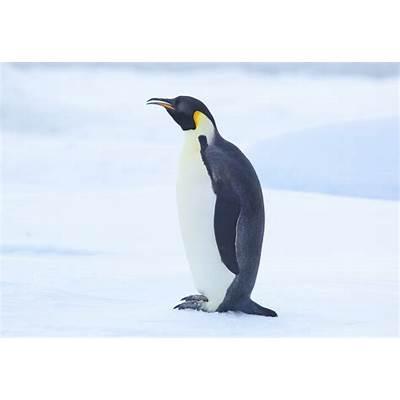 "Search Results for ""Emperor Penguin"" – Calendar 2015"