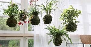 Orchideen Ohne Topf : kokedama der deko trend aus japan mein sch ner garten ~ Eleganceandgraceweddings.com Haus und Dekorationen