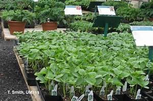 Greenhouse  U0026 Floriculture  Vegetable Bedding Plant