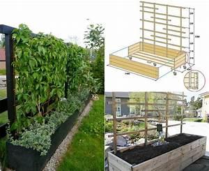 mobiler sichtschutz pflanzen spalier selber bauen garten With pflanzen sichtschutz terrasse