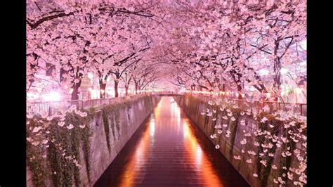 los  tuneles de arboles mas hermosos del mundo youtube