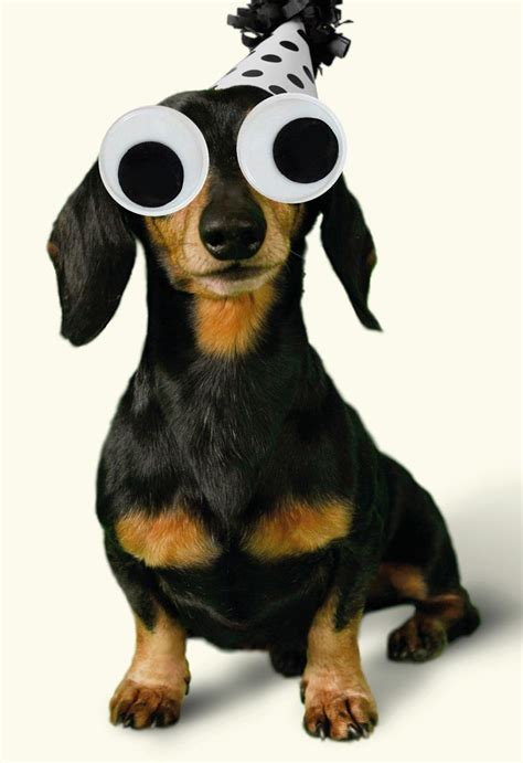googly eyes wiener dog funny birthday greeting cards