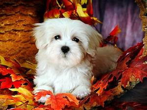 SUN SHINES: Lovely Little White Fluffy Puppy