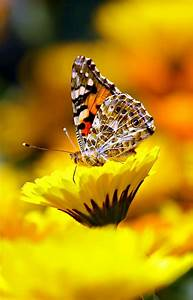 The 30 Most Beautiful Butterflies | MostBeautifulThings