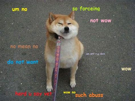 New Doge Meme - doge the best of the doge meme silliness pinterest doge meme doge and meme