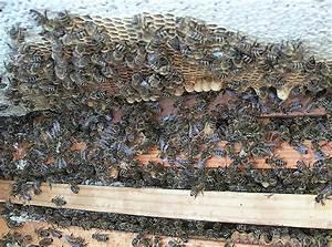 Honig Aus Eigener Imkerei : obsthof weinbau berger in oberkirch hesselbach honig aus eigener imkerei ~ Whattoseeinmadrid.com Haus und Dekorationen