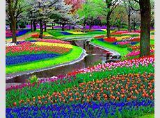 Paisajes de flores Fotografias y fotos para imprimir