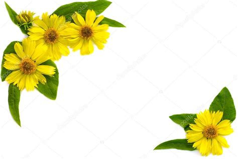 cornici immagini cornice fiori gialli foto stock 169 ambassador80 76408581
