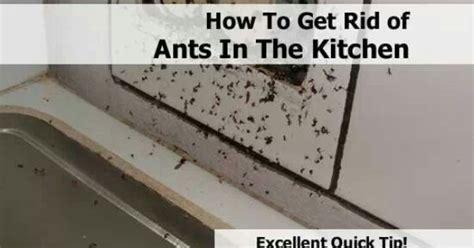 rid  ants   kitchen home pinterest