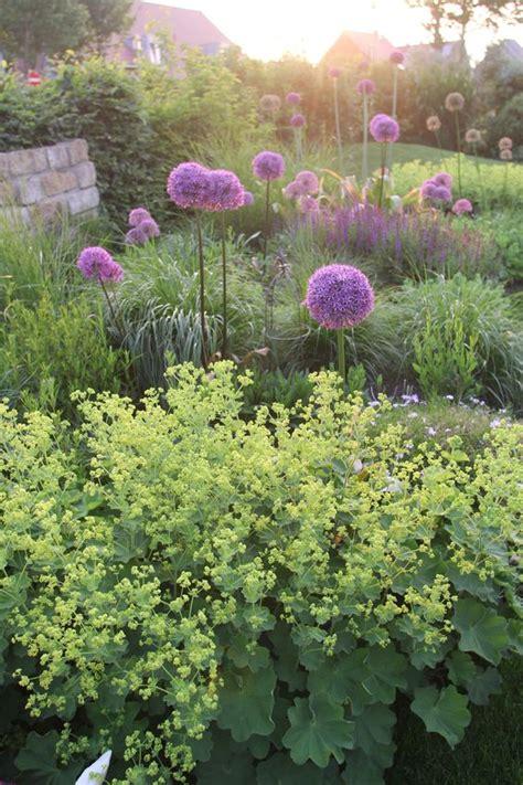 Lavendel Und Gräser by Zierlauch Kombiniert Mit Frauenmantel Ziersalbei Und