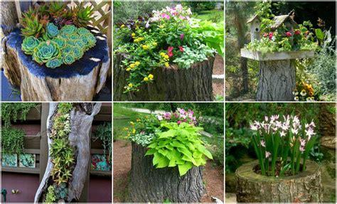 Baumstumpf Kreativ Gestalten by Dekoidee Baumstamm Bepflanzen Nettetipps De