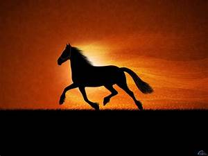 Horses images More horse wallpapers! HD wallpaper and ...