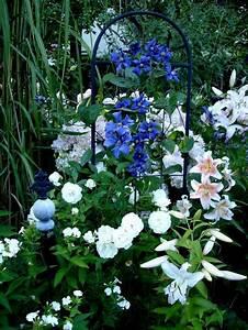 Welche Blumen Blühen Im Oktober : welche clematis viticella gerne auch bilder page 2 mein sch ner garten forum ~ Bigdaddyawards.com Haus und Dekorationen