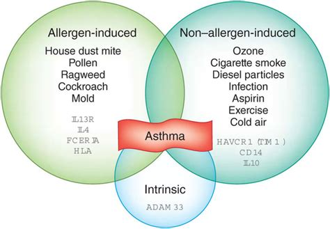 forms of asthma asthma asthma allergy clinic