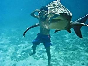 Prolonging me : Time To Speak UP !!: 15 of the Worst Shark ...