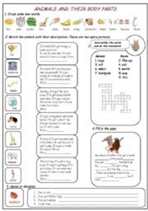 animal body parts worksheets