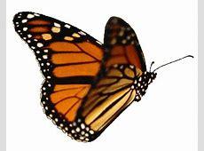Unduh 930  Gambar Animasi Bergerak Kupu-kupu  Terbaru