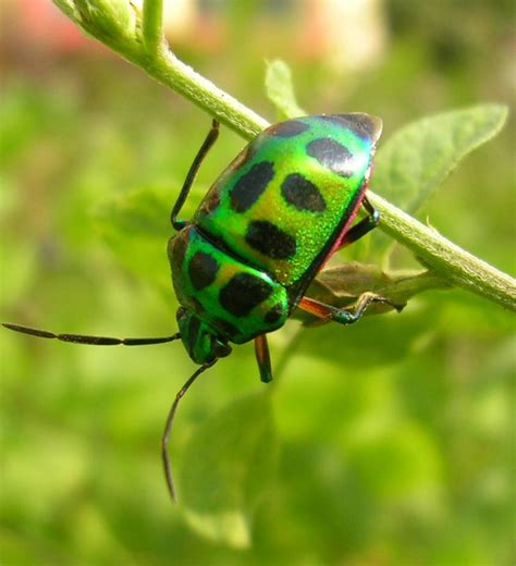 colorful insects colorful insect interesting insects
