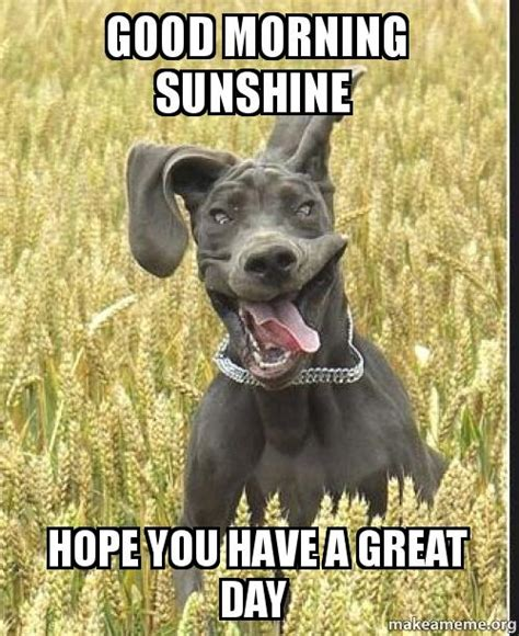 Nice Day Meme - good morning sunshine hope you have a great day make a meme