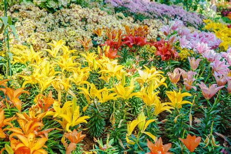 alle verschillende bloemen verschillende soorten bloemen stock afbeelding