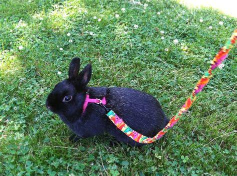 181 Best Cute Little Bunnies Images On Pinterest