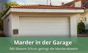 Marder Vom Auto Fernhalten : marder in der garage mit diesem schutz gelingt die marderabwehr ~ Frokenaadalensverden.com Haus und Dekorationen