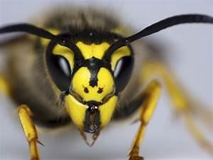 Welchen Geruch Mögen Wespen Nicht : wespen vertreiben ~ Articles-book.com Haus und Dekorationen