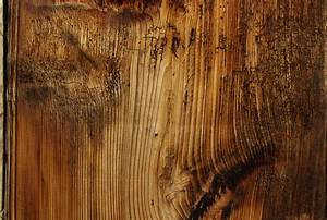 Free, Images, Tree, Branch, Structure, Board, Texture, Floor, Trunk, Old, Formation, Natural