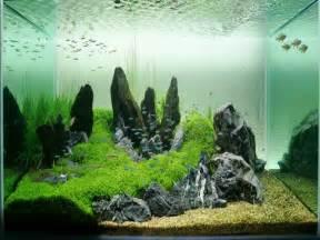 aquarium designer decoration attractive saltwater aquarium design ideas saltwater aquarium design ideas fish