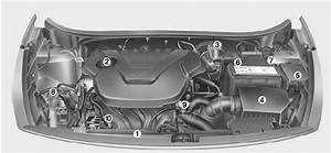 Kia Rio  Engine Compartment - Maintenance