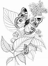 Coloring Butterfly Schmetterling Raupe Patterns Yarn Malvorlage Schmetterlinge Gratis Ausmalbilder Tsgos Tiere Pyrography Printable Ausmalbild Kleurplaten Malvorlagen Colouring Draw Adults sketch template