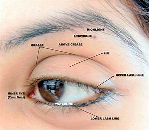 Detailed Eye Diagram For  Makeup  With Images