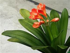 Plante Tropicale D Intérieur : plante verte fleurie interieur ~ Melissatoandfro.com Idées de Décoration