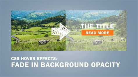 Background Image Opacity Css Background Opacity Html Css Background Editing Picsart