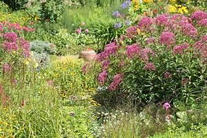 Warum Sind Pflanzen Grün : warum insekten im garten so wichtig sind nabu ~ Markanthonyermac.com Haus und Dekorationen