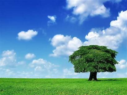 Field Tree Wallpapers Backgrounds Tag