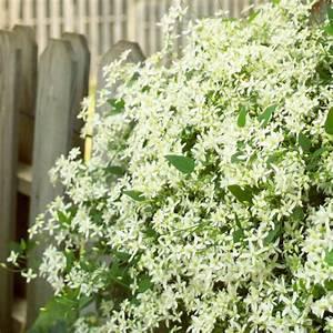 Welche Blumen Blühen Im Oktober : die sch nsten wei en blumen f r ihren garten ~ Bigdaddyawards.com Haus und Dekorationen